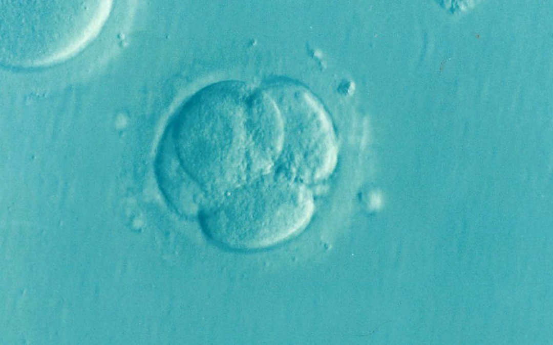 Fragmented Embryos : Can Acupuncture or Chinese Medicine help?